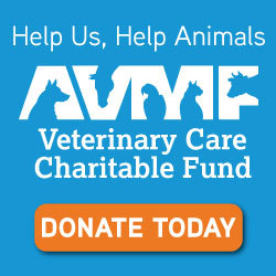 "AVMF ""Donate Today"""